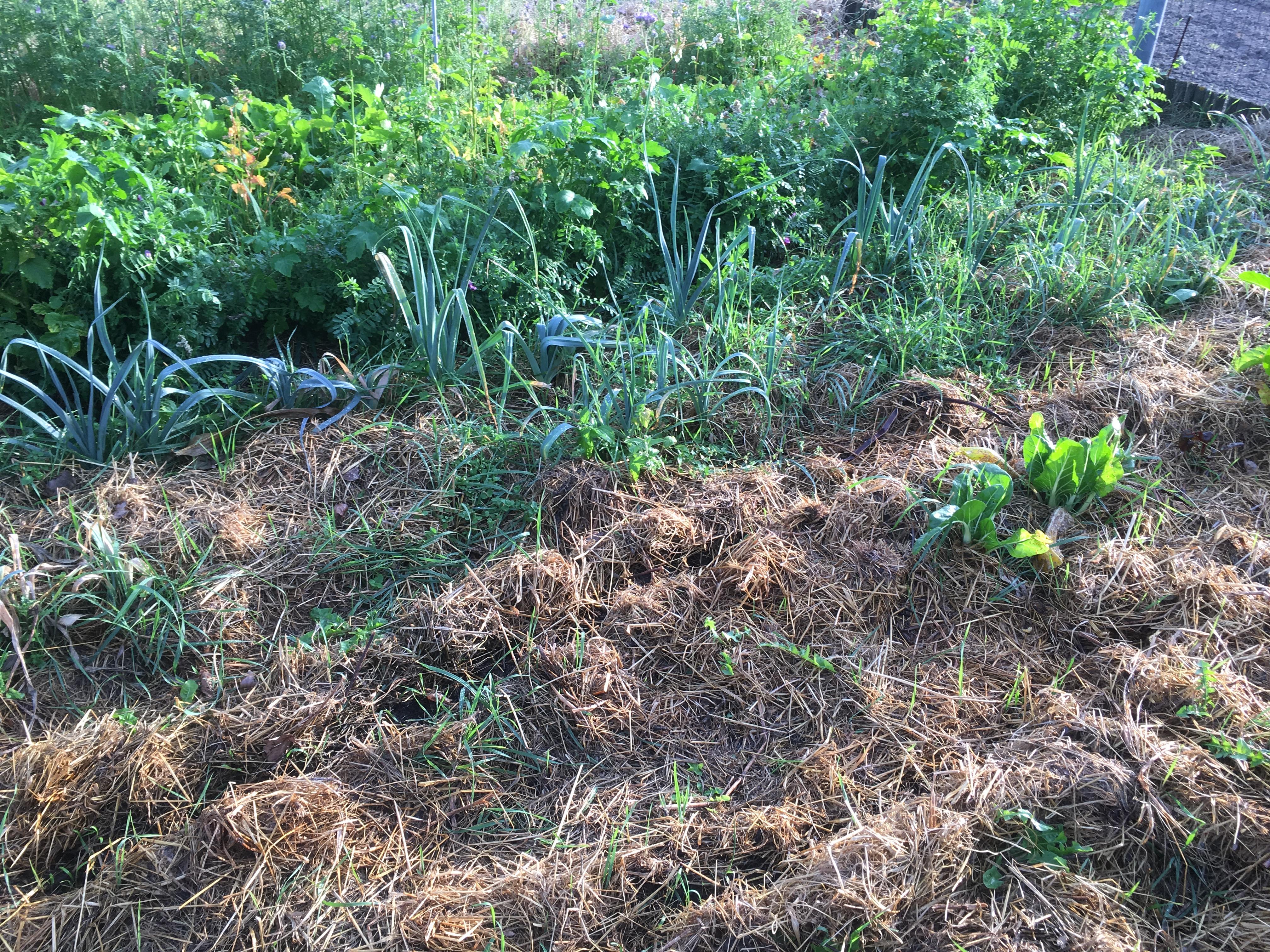 Essaimances permaculture Gravelines