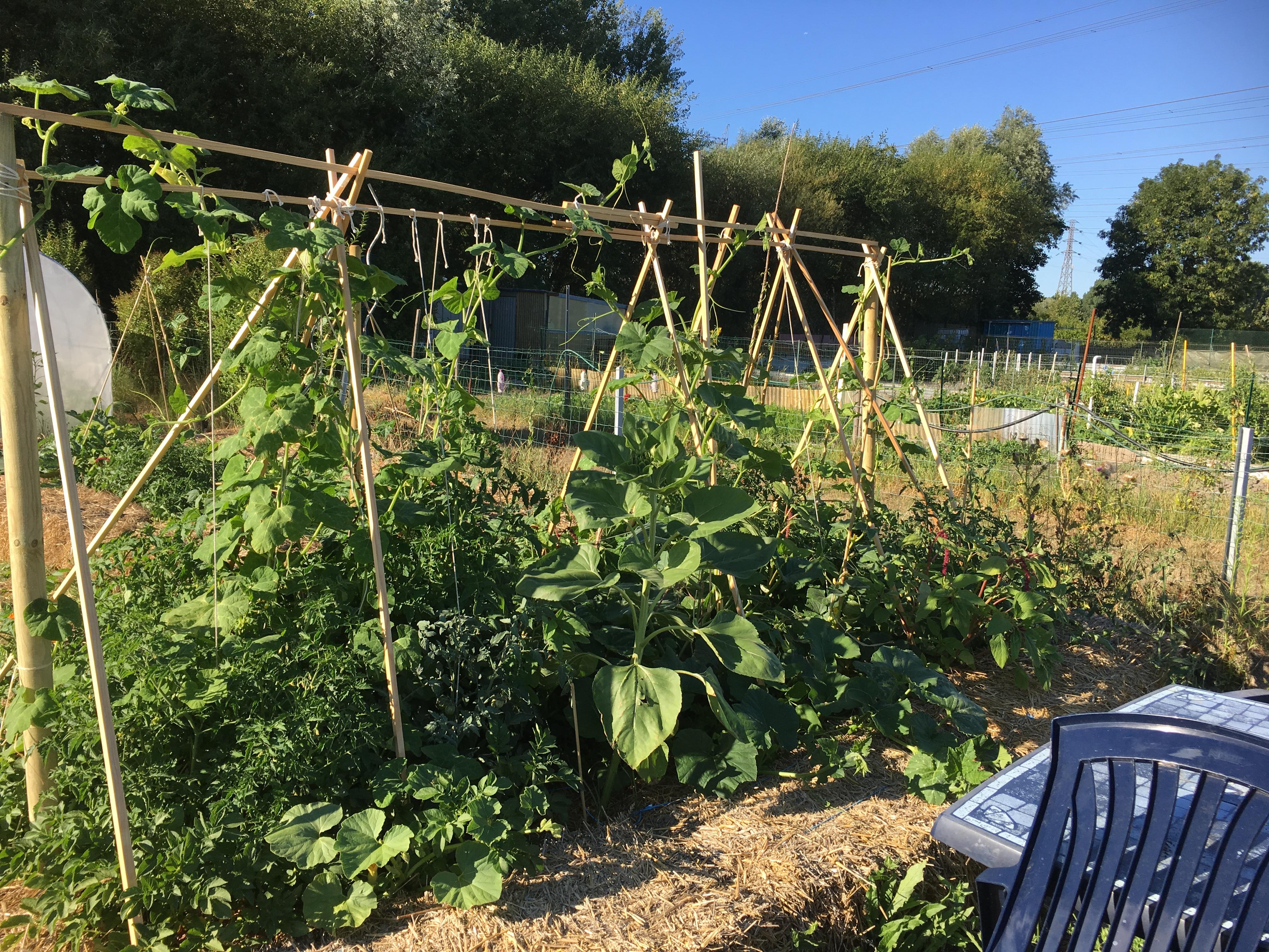 permaculture structure porteuse de courges et tomates